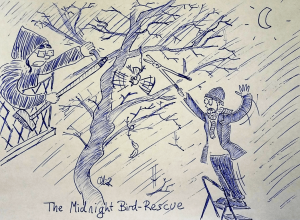 The Midnight Bird-Rescue